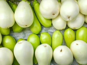 ◎今年も夏野菜が続々と収穫です◎